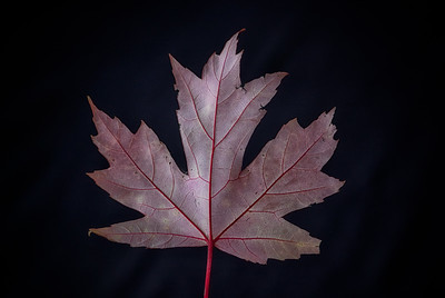 FallLeaves_HD_092912-33-Edit