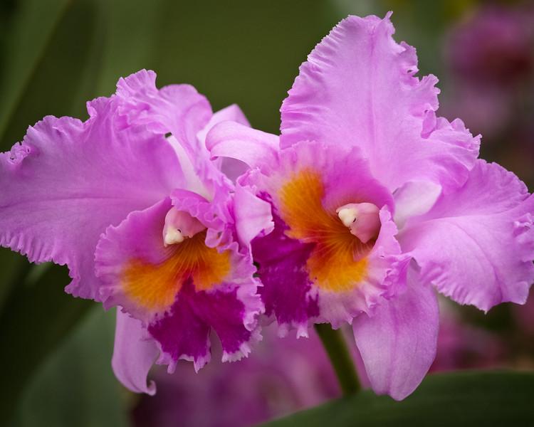 Flowers_03-16-11-523.jpg