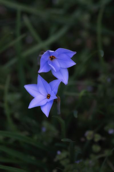 Flowers031220-83-Edit.jpg