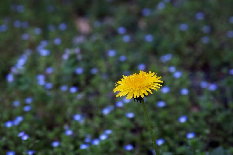 Flowers040919-195.jpg