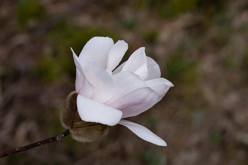 Flowers031220-48.jpg