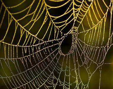 spiderweb_082010-12