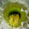 Cactus Blossom Interior