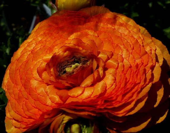 Flower Shop Images