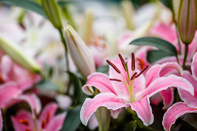 Flower Show 2015