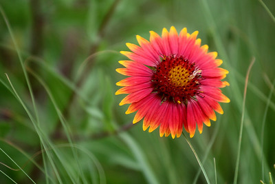 Flower Smellin'