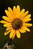 Flower @ Highbanks - August 2009