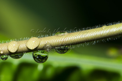 Water droplets on branch