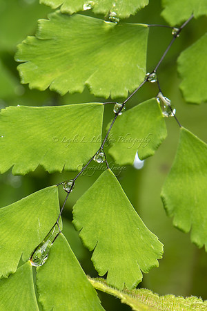 Fern with droplets