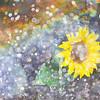 Sunflower and Rainbow