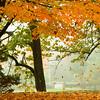 Falling Foliage