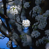 Tree White Flower