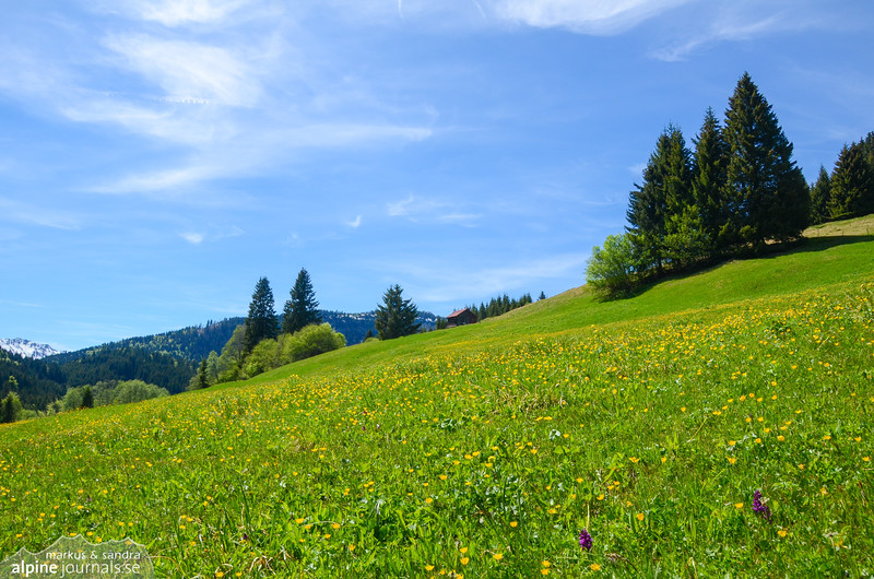 Summer meadow, Kleinwalsertal
