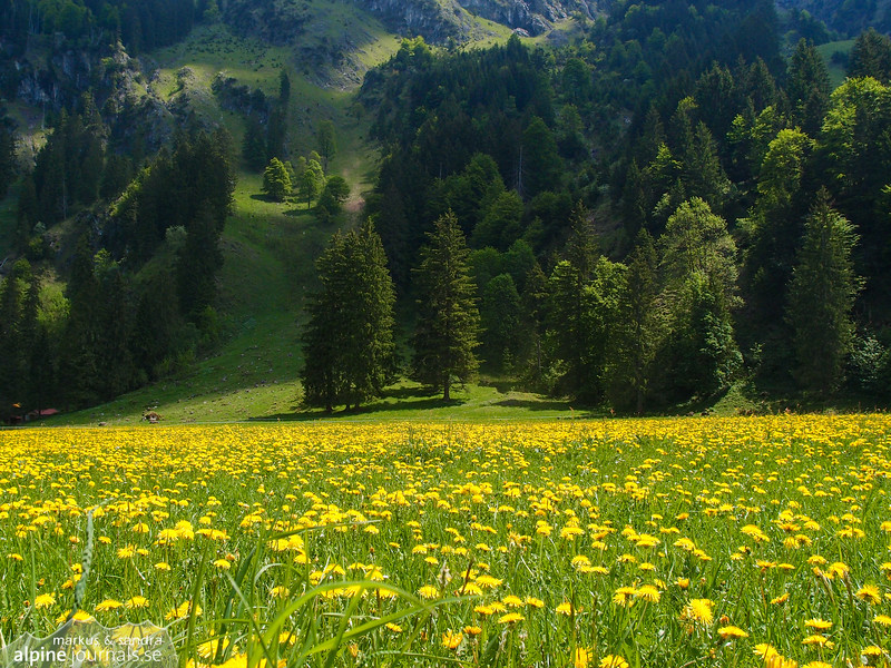 Spring meadow in Rappenalptal