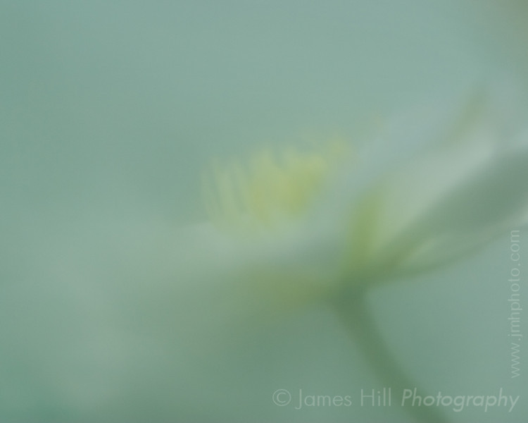 Shot through a green Mason jar which was hanging on the post with the flowers.