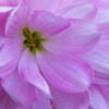 10-28-12<br /> Think Pink -- Mum for Breast Cancer Awareness<br /> My first post on the Daily Photos