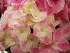 Flower 29