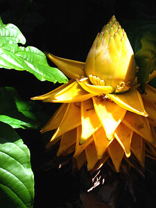 Denver Botanic Gardens 0508 (42)