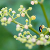 These flowers are VERY popular with all kinds of insects!