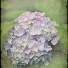 DSC_3323 texture