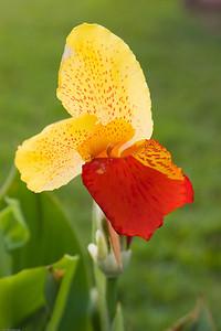 Flower, Maui, HI, 1602