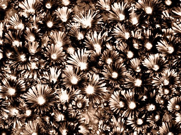 CO 2008 0530 DBG (37) sepia