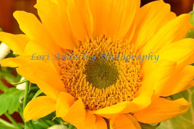 Sunflower: Yellow as the sun