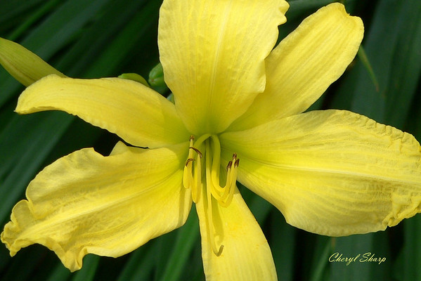 Flowers (1)b