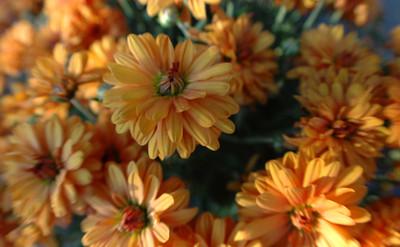 Flower Fisheye 2