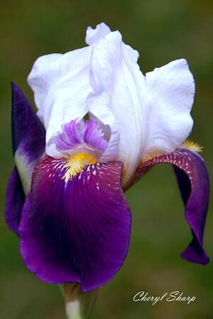 Flowers (2)b