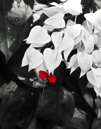 2013 0408 ECDS Butterfly Pavilion 32 crop select color