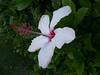 Flower 16