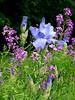 M&D's Flower Garden, Townsend Rd, Martinsville, OH