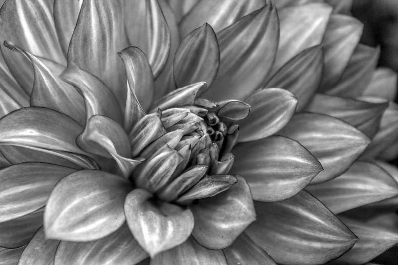 Flowers B/W