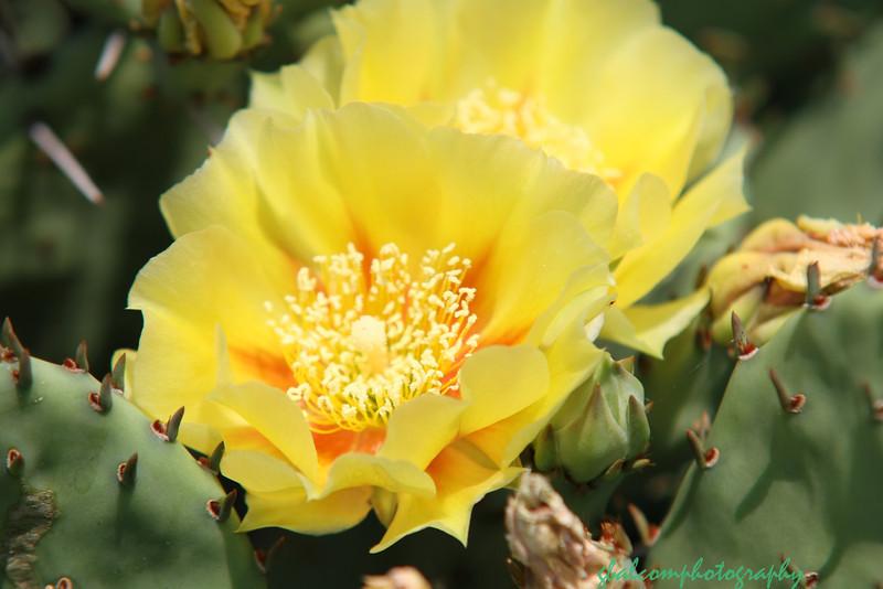 Cactus from Grandma 003