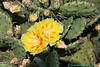 Cactus from Grandma 002