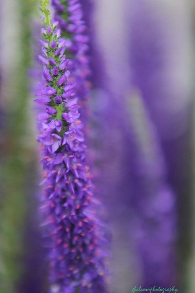 Nature Flowers 018