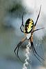 spider022