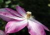 spring flowers 241