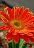 spring flowers 354
