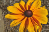 fleurs_5245 E
