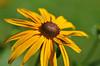 fleurs_5242 E