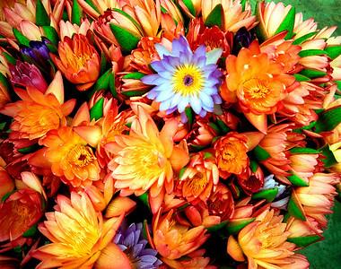 """Lotuses in Full Bloom"" Photographed in rural Taiwan."