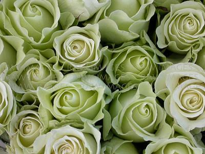 Green roses cu