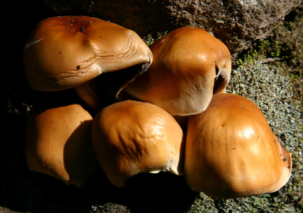 Mushrooms in Sangre de Christo mountains
