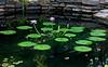 Duke Gardens, Duke University --