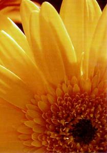 Daisy Rays 02-26-21 crop