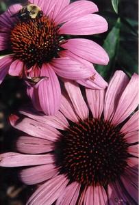 bee & flower 01-74-14