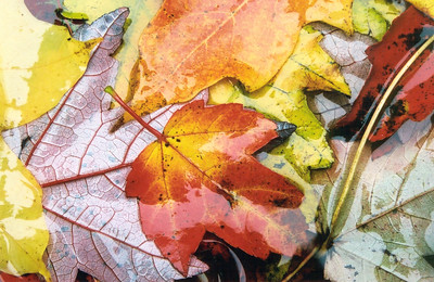 autumn 029610