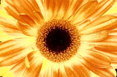 gerber sunburst 02-12-12